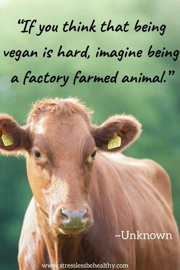 vegan quotes unknown
